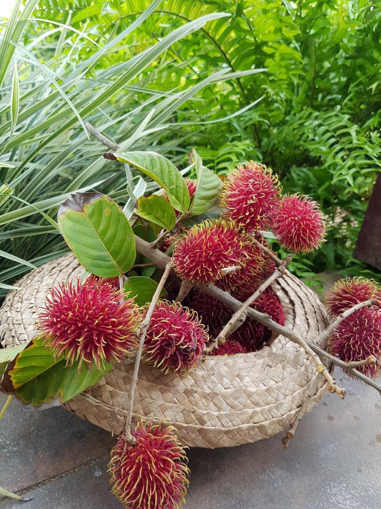 Ramboutant-Panier fruit Martinique